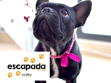 Escapada Pet Friendly